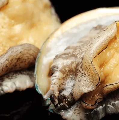 abalone-in-singapore-4